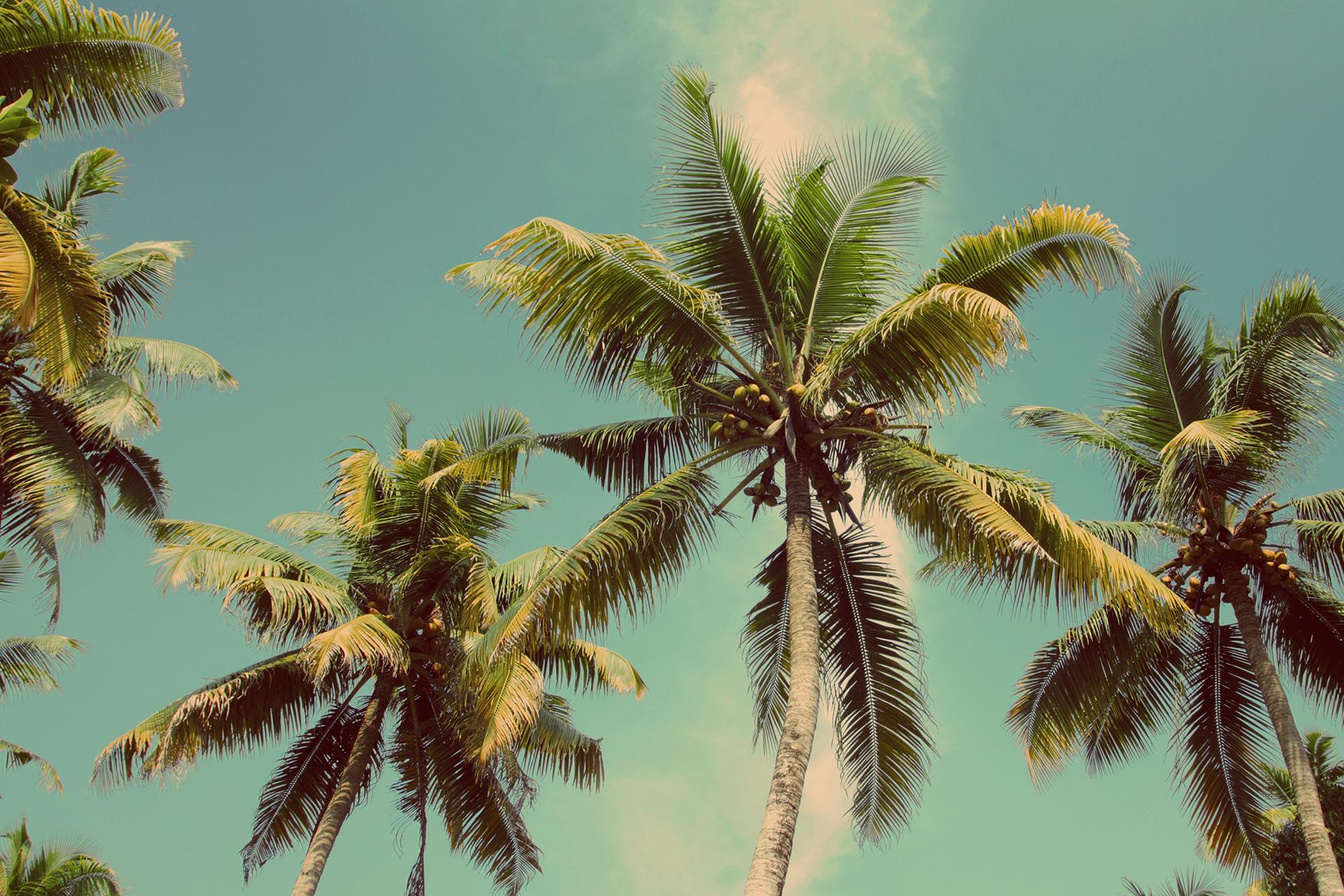 En palme